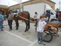 SPERONE - sfilata di cavalli - festa San Giuseppe Lavoratore - 29 aprile 2012  - Custonaci (483 clic)