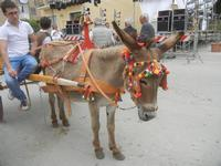 SPERONE - sfilata di cavalli - festa San Giuseppe Lavoratore - 29 aprile 2012  - Custonaci (472 clic)