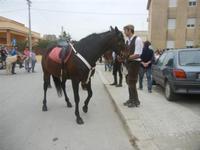 SPERONE - sfilata di cavalli - festa San Giuseppe Lavoratore - 29 aprile 2012  - Custonaci (475 clic)