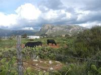 Riserva Naturale Orientata Capo Rama - entroterra - 15 aprile 2012  - Terrasini (1342 clic)