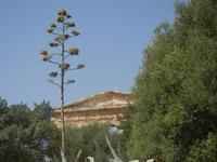 il tempio - 5 agosto 2012  - Segesta (529 clic)