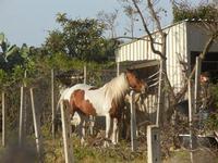 cavallo - 6 maggio 2012  - Castellammare del golfo (797 clic)