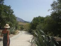 la strada del tempio - 5 agosto 2012  - Segesta (757 clic)