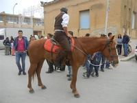 SPERONE - sfilata di cavalli - festa San Giuseppe Lavoratore - 29 aprile 2012  - Custonaci (432 clic)