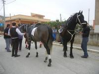 SPERONE - sfilata di cavalli - festa San Giuseppe Lavoratore - 29 aprile 2012  - Custonaci (573 clic)