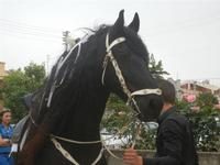 SPERONE - sfilata di cavalli - festa San Giuseppe Lavoratore - 29 aprile 2012  - Custonaci (428 clic)