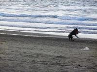 cagnolino gioca in riva al mare - Spiaggia Plaja - 20 settembre 2012  - Castellammare del golfo (321 clic)
