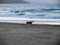 cagnolino gioca in riva al mare - Spiaggia Plaja - 20 settembre 2012  - Castellammare del golfo (360 clic)