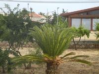 cicas - 4 giugno 2012  - Alcamo (265 clic)