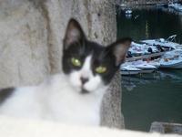 gatto e porto - 19 settembre 2012  - Castellammare del golfo (335 clic)
