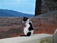 gatto - 19 settembre 2012  - Castellammare del golfo (858 clic)