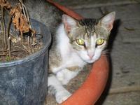 gatto al porto - 19 settembre 2012  - Castellammare del golfo (320 clic)