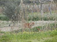 cagna e cagnolini - 29 gennaio 2012  - Marsala (360 clic)