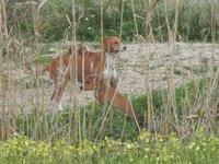 cagna e cagnolini - 29 gennaio 2012  - Marsala (509 clic)