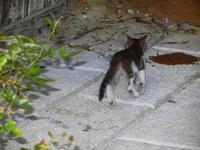 gatto al porto - 19 settembre 2012  - Castellammare del golfo (334 clic)