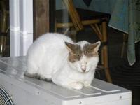gatto al porto - 19 settembre 2012  - Castellammare del golfo (302 clic)