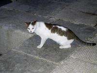 gatto al porto - 19 settembre 2012  - Castellammare del golfo (369 clic)