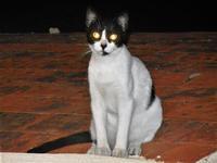gatto sul tetto -19 settembre 2012  - Castellammare del golfo (405 clic)