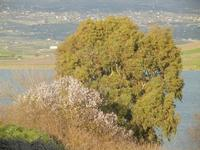 Lago Arancio - 26 febbraio 2012  - Sambuca di sicilia (1034 clic)