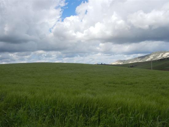 campi di grano e panorama con nuvole - BUSETO PALIZZOLO - inserita il 07-Jul-14