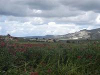 sulla, campi di grano e panorama con nuvole - 15 aprile 2012   - Buseto palizzolo (486 clic)