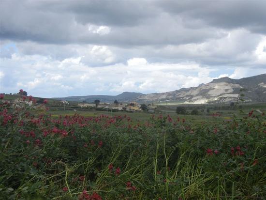 sulla, campi di grano e panorama con nuvole - BUSETO PALIZZOLO - inserita il 07-Jul-14