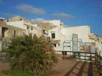 al Belvedere palma nana e case - 8 gennaio 2012  - Marinella di selinunte (478 clic)