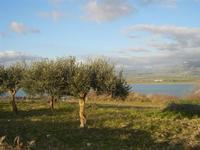 Lago Arancio - 26 febbraio 2012  - Sambuca di sicilia (1051 clic)