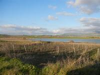 Lago Arancio - 26 febbraio 2012  - Sambuca di sicilia (898 clic)