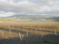 Lago Arancio - 26 febbraio 2012  - Sambuca di sicilia (1895 clic)