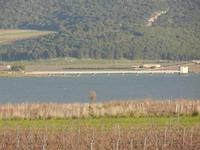 Lago Arancio - 26 febbraio 2012  - Sambuca di sicilia (1517 clic)