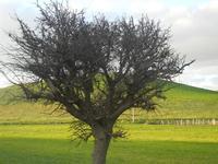panorama agreste - 26 febbraio 2012  - Sambuca di sicilia (1188 clic)