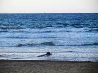 spiaggia e mare Spiaggia Plaja - 20 settembre 2012  - Castellammare del golfo (871 clic)