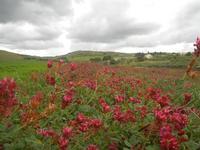 campo di sulla e panorama - 15 aprile 2012  - Buseto palizzolo (807 clic)