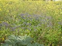 prato fiorito - 4 marzo 2012  - Buseto palizzolo (515 clic)