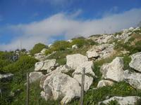 rocce e flora - 4 marzo 2012  - Custonaci (785 clic)