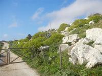trazzera, rocce e flora - 4 marzo 2012  - Custonaci (768 clic)