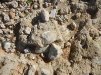 conchiglie fossili - 16 settembre 2012  - Cinisi (696 clic)
