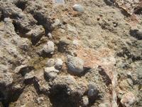 conchiglie fossili - 16 settembre 2012  - Cinisi (481 clic)