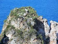 faraglioni - particolare - 21 settembre 2012  - Scopello (1011 clic)