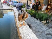 papera sulla fontana della piazzetta - 21 settembre 2012  - Scopello (1035 clic)