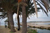 Saline, palme e Imbarcadero Storico per l'Isola di Mozia - 29 gennaio 2012 - foto di Nicolò Pecoraro  - Marsala (535 clic)