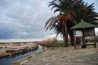 Saline, palme e Imbarcadero Storico per l'Isola di Mozia - 29 gennaio 2012 - foto di Nicolò Pecoraro  - Marsala (449 clic)