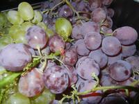 uva - 1 settembre 2012  - Alcamo (461 clic)