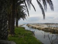 Saline, palme e Imbarcadero Storico per l'Isola di Mozia - 29 gennaio 2012  - Marsala (446 clic)