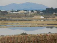 Saline - 29 gennaio 2012  - Marsala (458 clic)