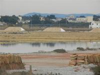 Saline - 29 gennaio 2012  - Marsala (434 clic)