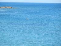 Baia di Guidaloca - mare calmo - 6 maggio 2012  - Castellammare del golfo (294 clic)