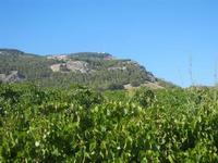 vigneto e Monte Bonifato - 15 agosto 2012  - Alcamo (296 clic)