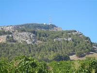 vigneto e Monte Bonifato - 15 agosto 2012  - Alcamo (274 clic)